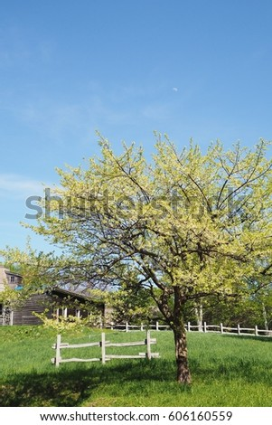 blooming tree in front of farmhouse, under the clear blue sky