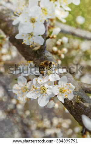 Blooming tree in spring - stock photo