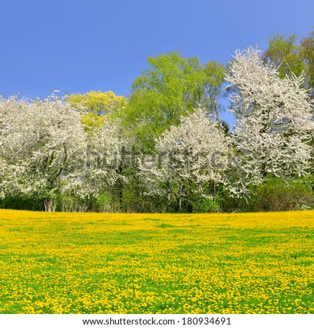 Blooming tree on spring meadow with dandelions - stock photo