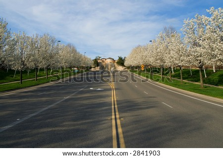 Blooming trees along the street - stock photo
