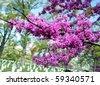 Blooming trees in the Arlington National Cemetery, Arlington Virginia USA - stock photo