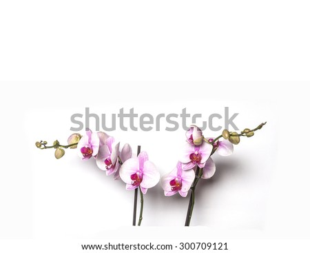 Blooming Twig Of White Purple Orchid Isolated On White Background. - stock photo