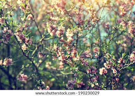 blooming twigs. spring morning  - stock photo