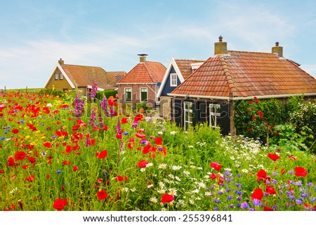 Blooming wild flowers in front of old Dutch houses in the province of Friesland - stock photo