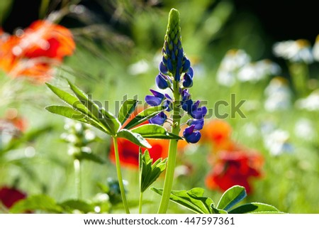 Blooming Wild Flowers on the Meadow in Summer - stock photo
