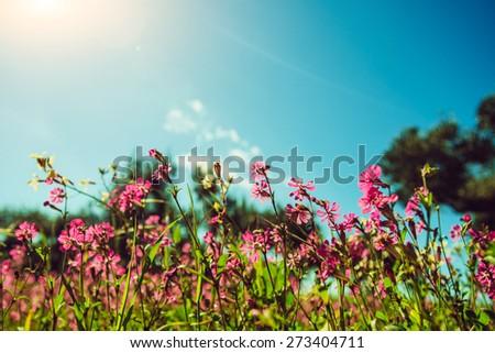 blooming wildflowers - stock photo