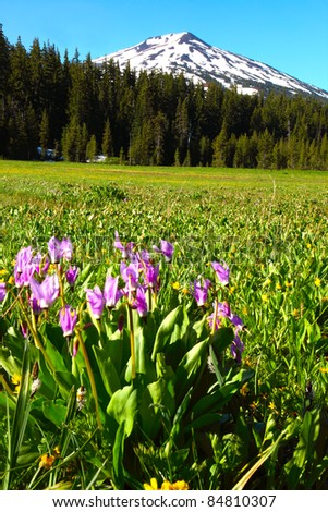 Blooming wildflowers in a meadow at the base of Mt. Bachelor located in the Oregon cascades. - stock photo
