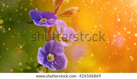 Blooming wildflowers in a meadow. close up. blue blooming Cardamine pratensis against the blurred nature background of a rural field. group blue flowers on a green background - stock photo