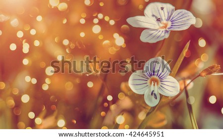 Blooming wildflowers in a meadow. close up. Lilac blooming Cardamine pratensis against the blurred nature background of a rural field. soft selective focus. instagram toning  effect - stock photo