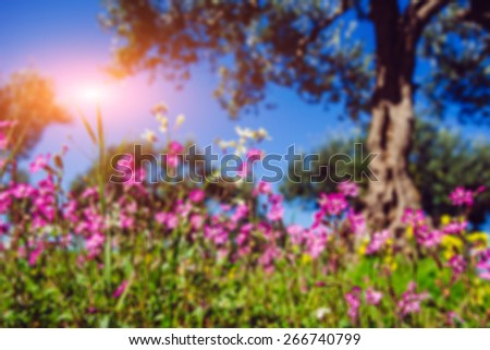 Blooming wildflowers.Natural blurred background. Soft light effect.  - stock photo