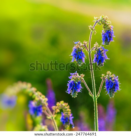 blooming wildflowers on fresh green background - stock photo