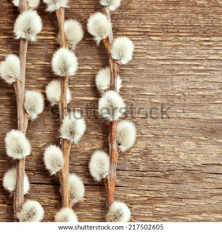 Blooming willow twigs on a wooden background - stock photo