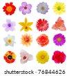 Blooms in summer season - stock photo