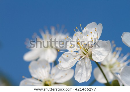 blossom - stock photo