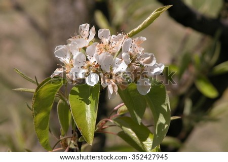 blossom blurred back  - stock photo