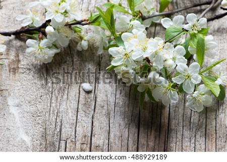 Blossom branch on a wooden background
