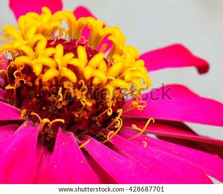 blossom flower in macro - stock photo