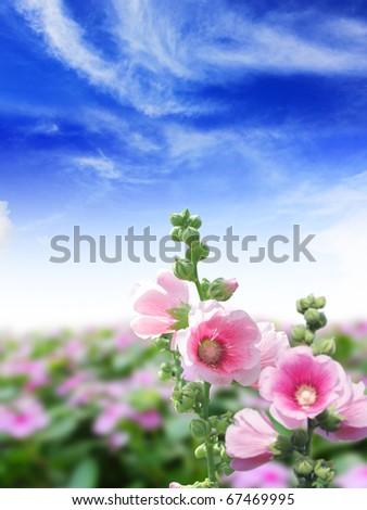 blossom flower on the  blue sky - stock photo
