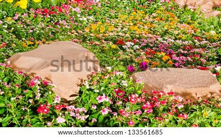 Blossom flowers garden - stock photo