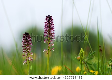 Blossom in the green grass - stock photo