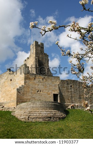 Blossom is flowering at Prudhoe Castle - stock photo