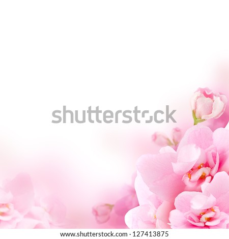 Blossom - pink flower, floral background - stock photo