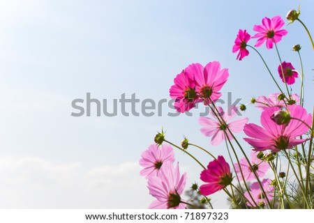 Blossom pink flower in a beautiful day