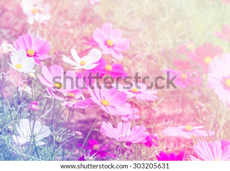 Blossom pink flower in a beautiful day with color filters. - stock photo