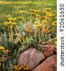 Blossom sedum stonecrop flowerbed on the stones - stock photo