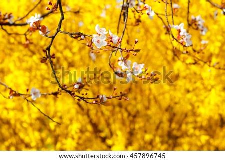 Blossom tree over nature background - stock photo