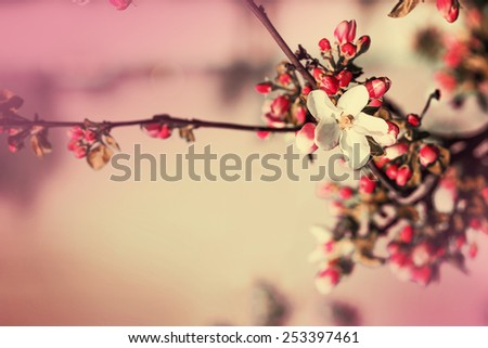 Blossom tree over nature background/ Spring flowers/ Spring Background - stock photo