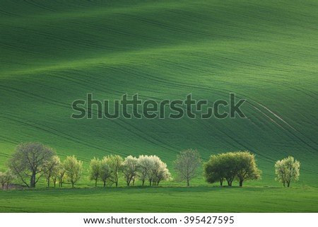 Blossom Trees overlooking rolling hills with fields in sunset light suitable for backgrounds or wallpapers, natural minimalism landscape, South  Moravia, Europe - stock photo