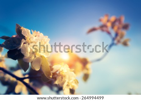Blossoming apple orchard glowing by sunlight on a blue sky. Ukraine, Europe. Beauty world. Retro and vintage style, soft filter. Instagram toning effect. - stock photo