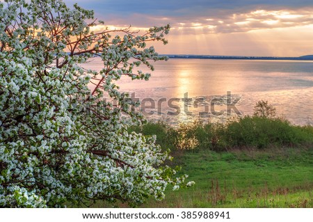 blossoming apple tree on sunset background. spring landscape flowering apple trees on the river bank at sunset. Blossoming apple orchard in spring. Beauty world. - stock photo