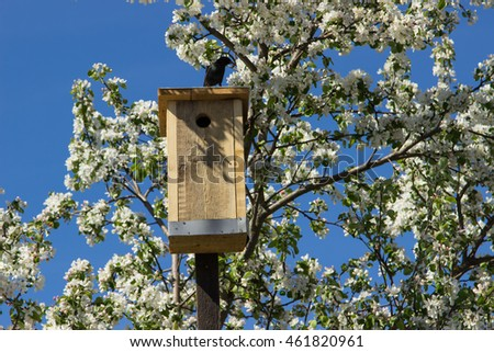 Blossoming apple tree with starling on nesting box