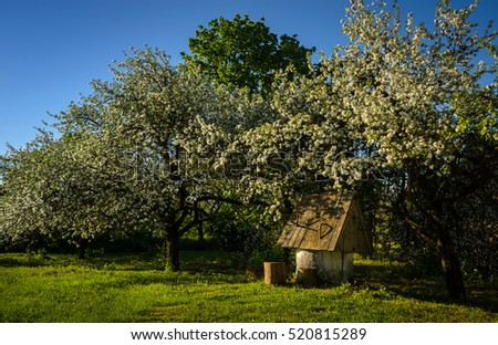 blossoming apple trees over the old well