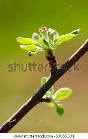 Blossoming branch of an apple-tree in a garden - stock photo