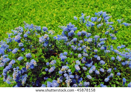 blossoming bush in a botanical garden of barcelona, spain - stock photo