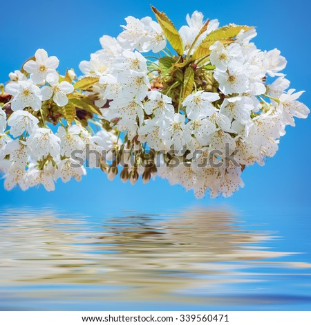 Blossoming Cherry Plum Against The Blue Sky - stock photo