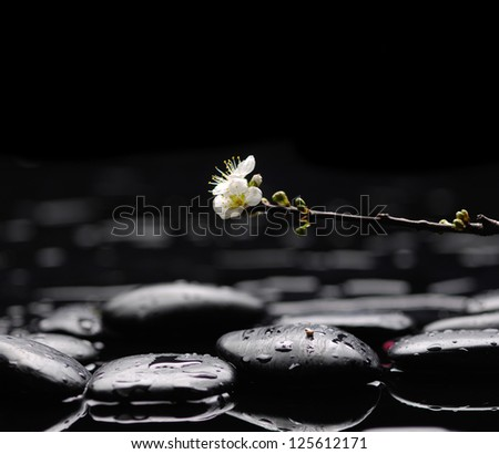 blossoming cherry -Spa series - stock photo