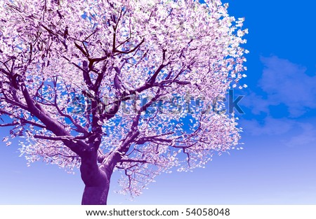 Blossoming cherry-tree