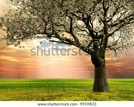 Blossoming cherry-tree in the late evening light - stock photo