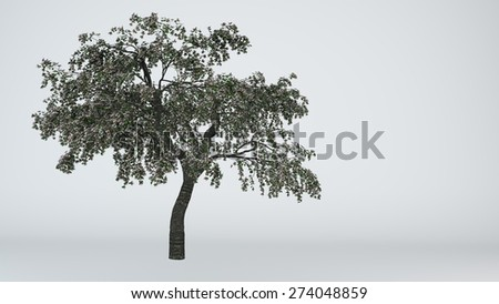 blossoming cherry tree isolated on white - stock photo