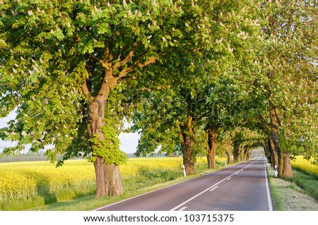 Blossoming chestnut trees along the countryside road. Germany, Europe. - stock photo