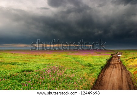 Blossoming field and country road - stock photo