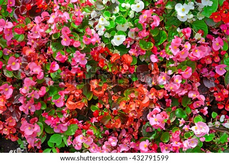 Blossoming flowerbed in the park. Natural background.