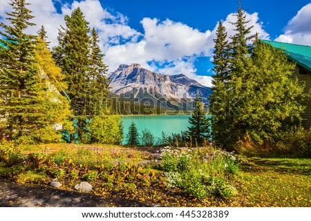 Blossoming glade in coniferous forest. Beautiful autumn day on the Emerald Lake. Rocky Mountains, British Columbia - stock photo