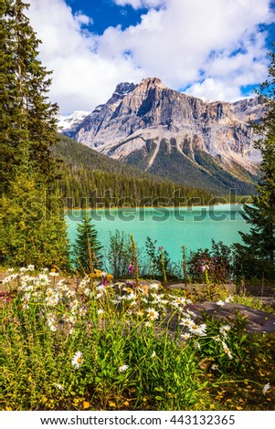 Blossoming glade in the forest on Emerald Lake. Solar cool morning in Rocky Mountains, British Columbia