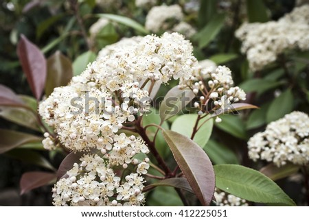Blossoming  in the summer - stock photo