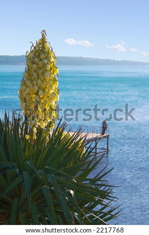 Blossoming palm tree on a background of the sea - stock photo